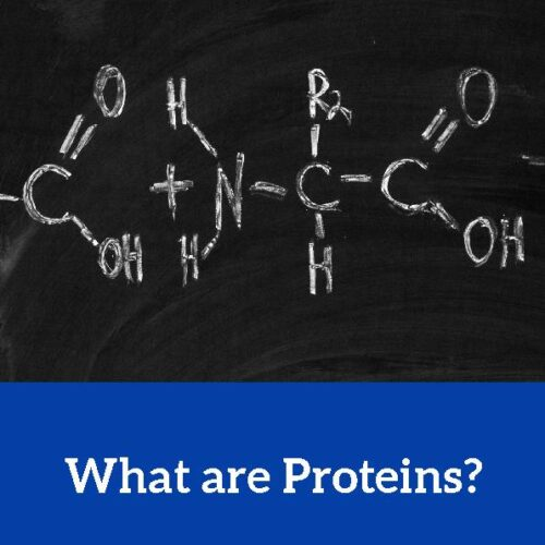 Protein, Reading Passage