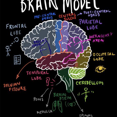 Brain Diagram Video